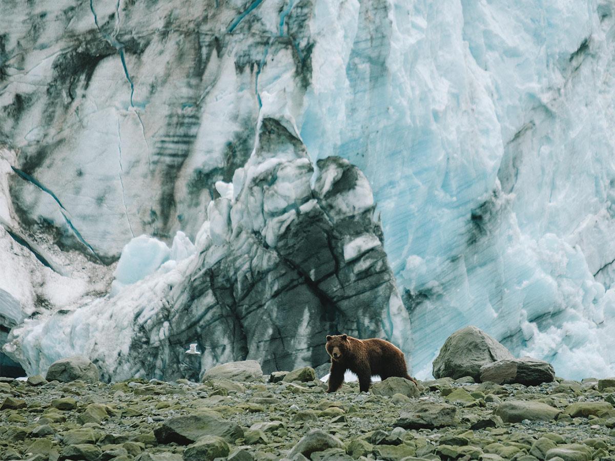 AlaskaButton - Posh